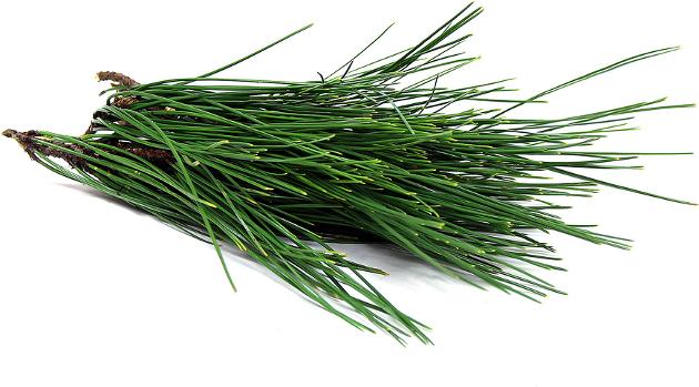 Pinho - pine needle