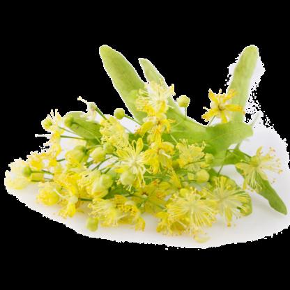 Flôr de Tília (linden flower)
