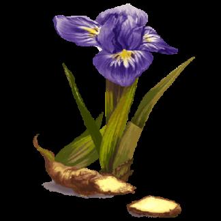 Raiz de Lírio (orris root)